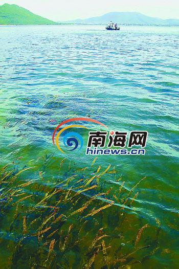 南海网7月21日消息:文昌市渔业部门积极引导村民转产转业,原来挖礁