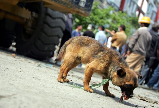 看!地震灾区的动物们