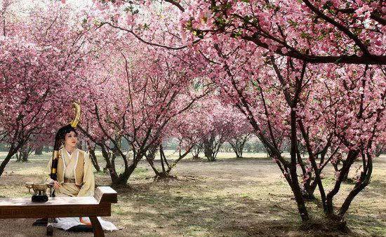 刘兰芝箜篌 孔雀东南飞 圆满杀青 集成传统美学