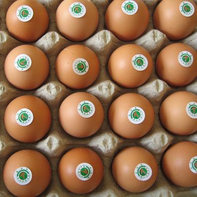 香港再次检出三聚氰胺超标鸡蛋 样本来自湖北图片