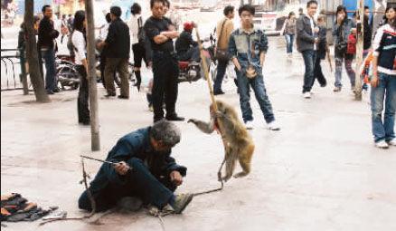 操逼的声��)^Y _猴子被逼表演发飙 操刀狠举棒打晕耍猴人[图]