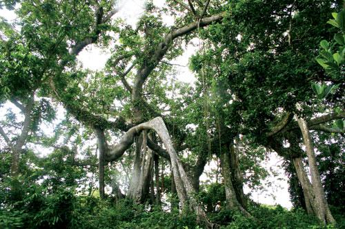 树冠 纹路矢量图