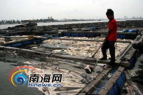 鱼漂安装图解步骤