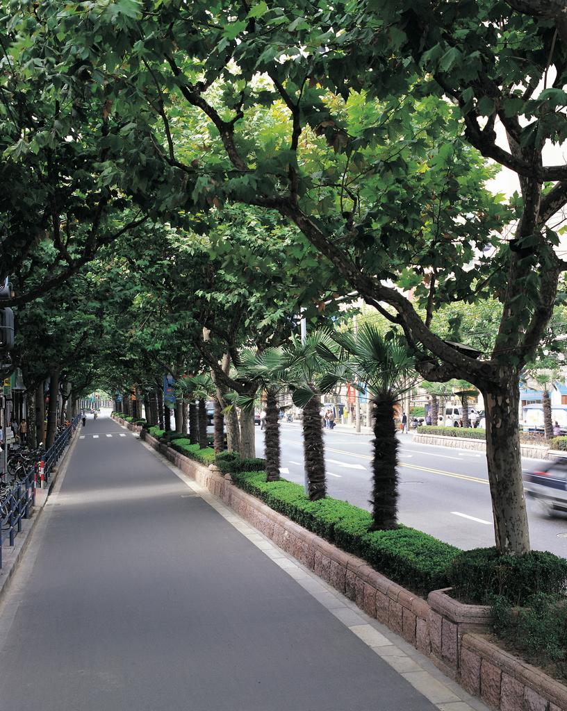 城市花坛的疏水蓄水功能 - 反对派 - 珠海刘德贡