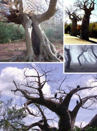 世界上最令人恐怖的大树 - 几度夕阳红 - 乡情悠悠.青山依旧