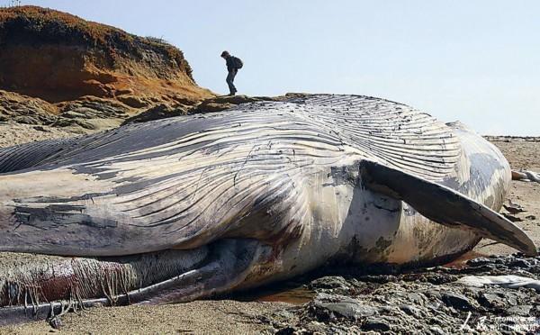 蓝鲸画图片大全大图_蓝鲸图片大全大图 _排行榜大全