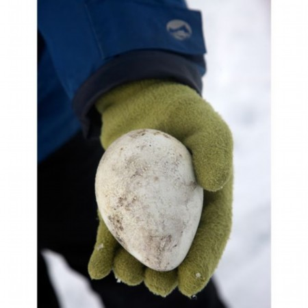 企鹅蛋   一枚被遗弃在雪丘岛上的企鹅蛋.(彬彬)
