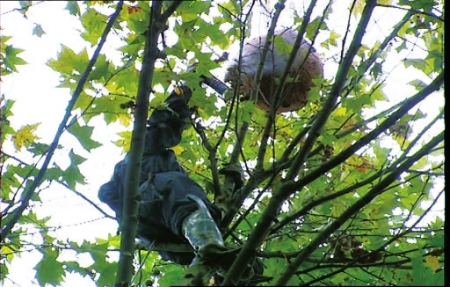 用绳子做爬树工具图解