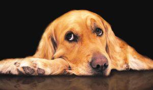 女人养大型狗后患无穷