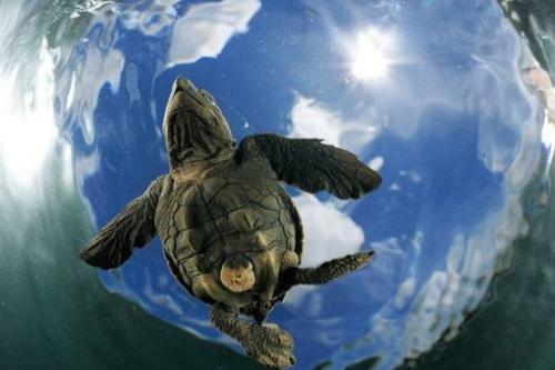 欧洲最佳野生动物摄影作品:猫头鹰形同鬼魅(1)