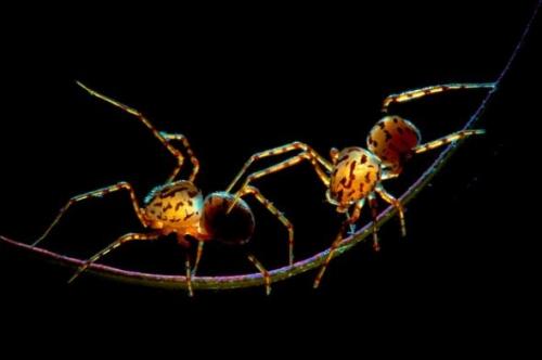 在他8年来的亮色微距摄影作品中,那些蚂蚁,蜗牛,瓢虫,蜘蛛等小动物