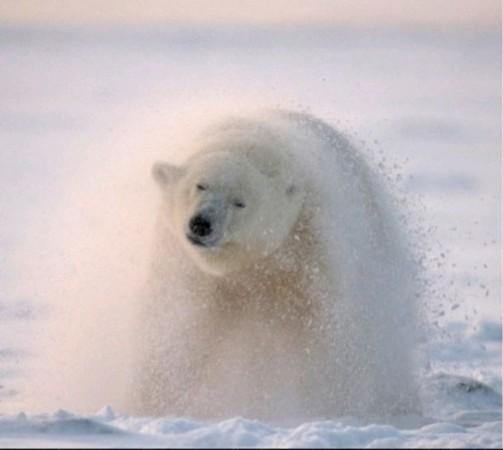 2019年即将灭绝的动物