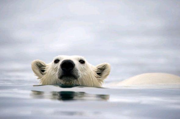 北极有动物脚印的相片