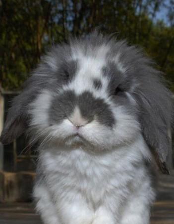 日本樱花台兔子台直播
