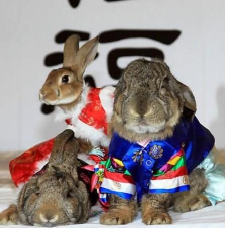 韩国兔子台网址
