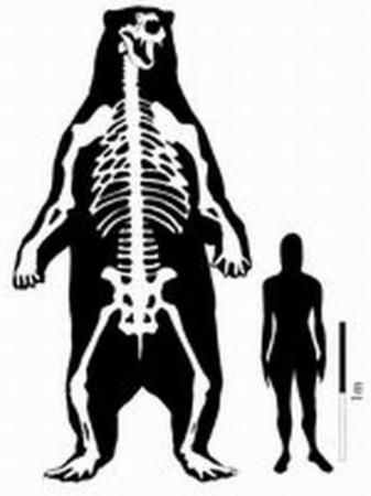 考古学家发现史上最大短面熊 高3.4米重1.6吨