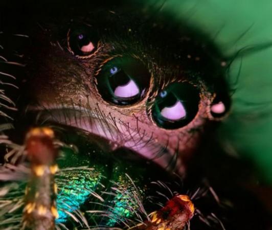 《昆虫眼睛高清微距摄影:须发毕现毛骨耸然》中国最著名博客女王干群精美作品编号2011021312 - 干群皇太后 - 干群共产主义国家