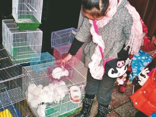 兔年宠物兔热销 垂耳兔卖到200多元