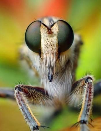 2012年度野生动物摄影师评选