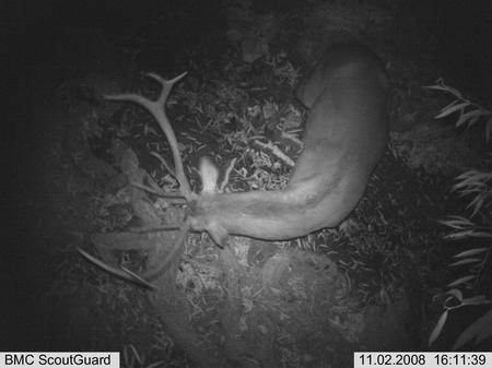 红外线自动拍摄相机,在我区首次开展对珍稀野生动物种群及数量的动态