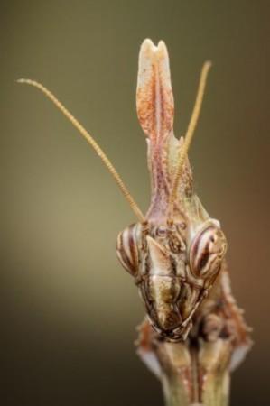 怪物设计图_微距镜头下巨型盾螳螂表演功夫(组图)(1)_南海网新闻中心