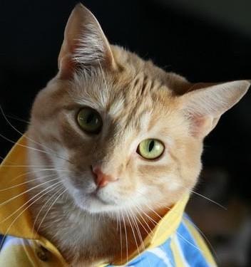 加菲猫,汤姆猫,中国的招财猫,黑猫警长,蓝猫,大脸猫……这么多可爱的