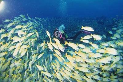 长岛潜水1