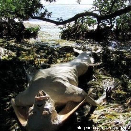 fotos de la sirena en el lago de maracaibo: