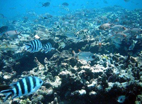 海洋污染对动物的影响