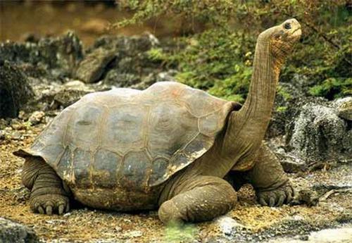 揭秘世界上最大的动物(1)