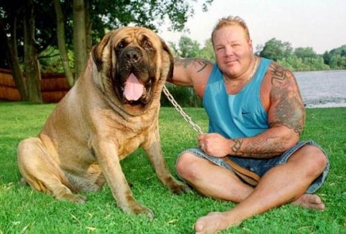 世界最的狗_世界上最高,最胖,最长寿的三种狗,个个堪称狗中人生赢家