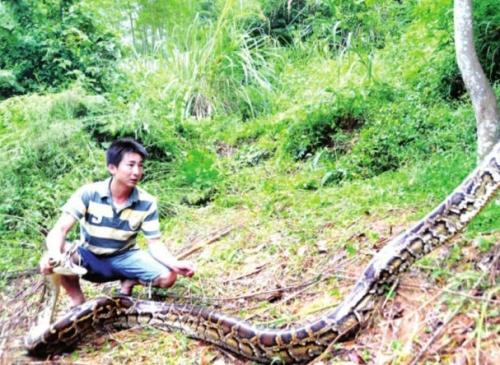 昨日上午,记者和闽侯县林业局野生动物保护资源站及福州市动物园