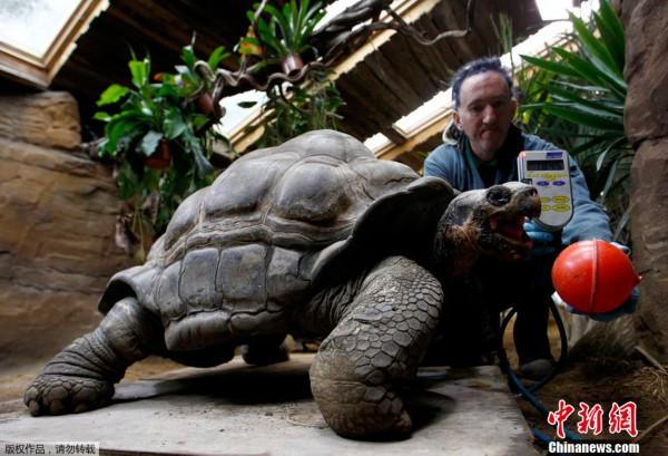 """英国伦敦动物园进行动物""""体检"""""""