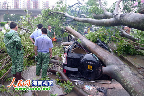 """""""纳沙""""肆虐 海口两轿车被刮倒大树砸变形图片"""