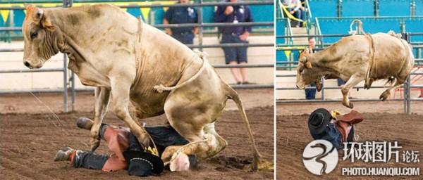 美骑牛表演出意外:公牛凌空踩踏骑手   2009年7月,美国加利福尼亚州一年一度的放牧人竞技会在加州圣迭戈举行。与往年一样,骑公牛表演仍是竞技会上最激动人心的表演。不过,此次 的骑公牛表演却发生意外一幕,一头狂躁的公牛把一名年迈的骑手掀翻在地,飞蹄狂踩,所幸在工作人员帮助下这名骑手只是轻微受伤。