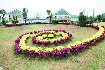 长沙生态动物园举办湖南最大规模菊展明日开幕