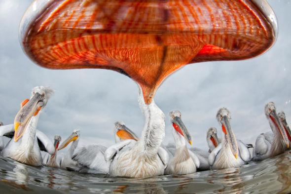 野生动物摄影佳作:油污中的静止生命夺冠(图)