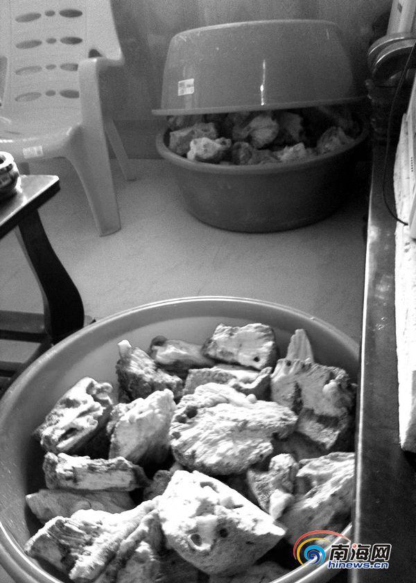 三亚:螺化玉谣言疯传大量珊瑚礁遭视频佟铁鑫歌曲毒手图片