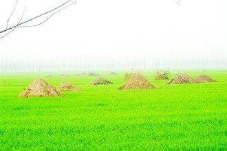 河南项城百人突击掘坟事件真相调查(图)