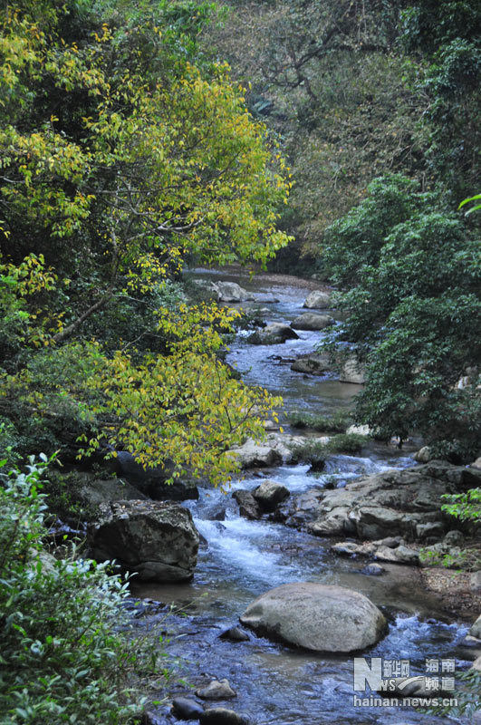 """通往海南五指山国家级自然保护区德满保护站路途中的一条溪流。(12月17日摄)   海南五指山国家级自然保护区位于海南岛中部,总面积13435.9公顷,最高峰海拔1867米,被称为""""南海之巅""""。五指山森林里负氧离子每立方厘米含量10000以上,生物种类丰富多样,森林植被茂密。每年进入秋冬季节,五指山上红叶植物——秋枫叶子由绿转为黄色、红色,将五指山装点得五彩斑斓,犹如童话世界。美景也吸引了众多户外运动爱好者和摄影爱好者前来欣赏。   新华网海南频道纪惊鸿摄"""