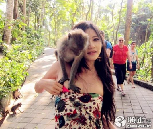游客惨遭动物围攻的惊魂一幕