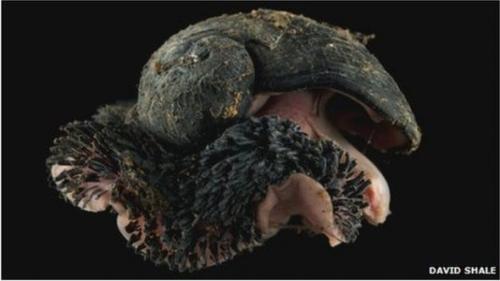 印度洋海底火山热液出口发现奇特深海动物