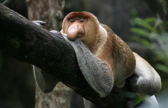 地球形状最奇特的动物大盘点