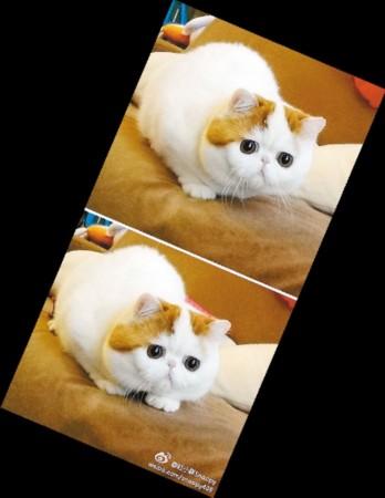 红呀么包子_猫叔出现强敌 网友迷上萌猫红小胖Snoopy[图]_南海网新闻中心