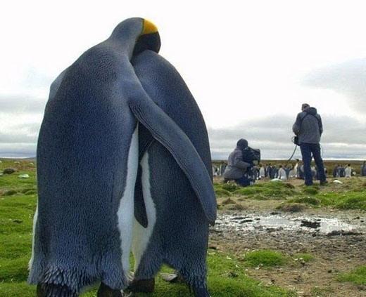 看看世界各地的动物们怎么过情人节[组图]