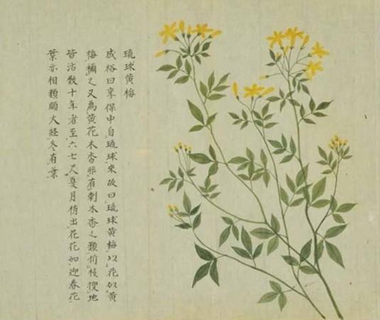石榴花素描-一花一世界 那些植物画家笔下的美丽