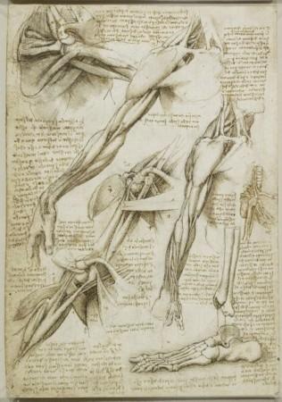 达芬奇在1511年绘制的解剖素描图,展示了肩部和手臂肌肉以及足骨