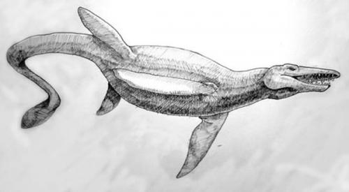 南美惊现最早的爬行动物胚胎化石