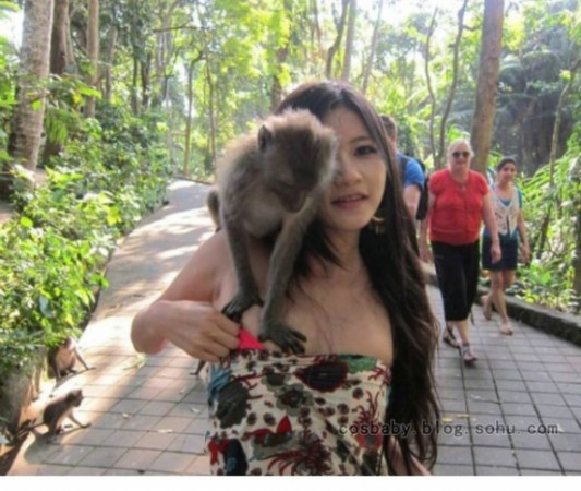 美女旅游景区竟遭衣服袭胸猴子被扯掉头像头像鹿图片晗字qq女生带图片