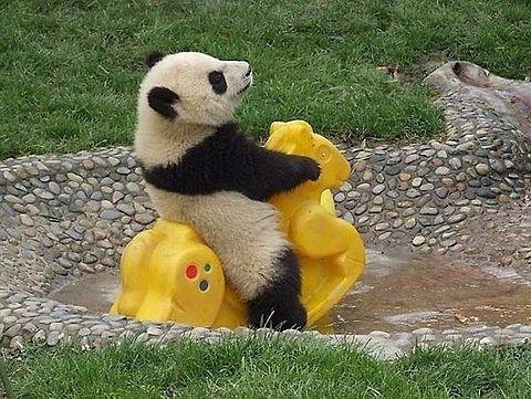 小动物最萌瞬间 看了你就忘不了!